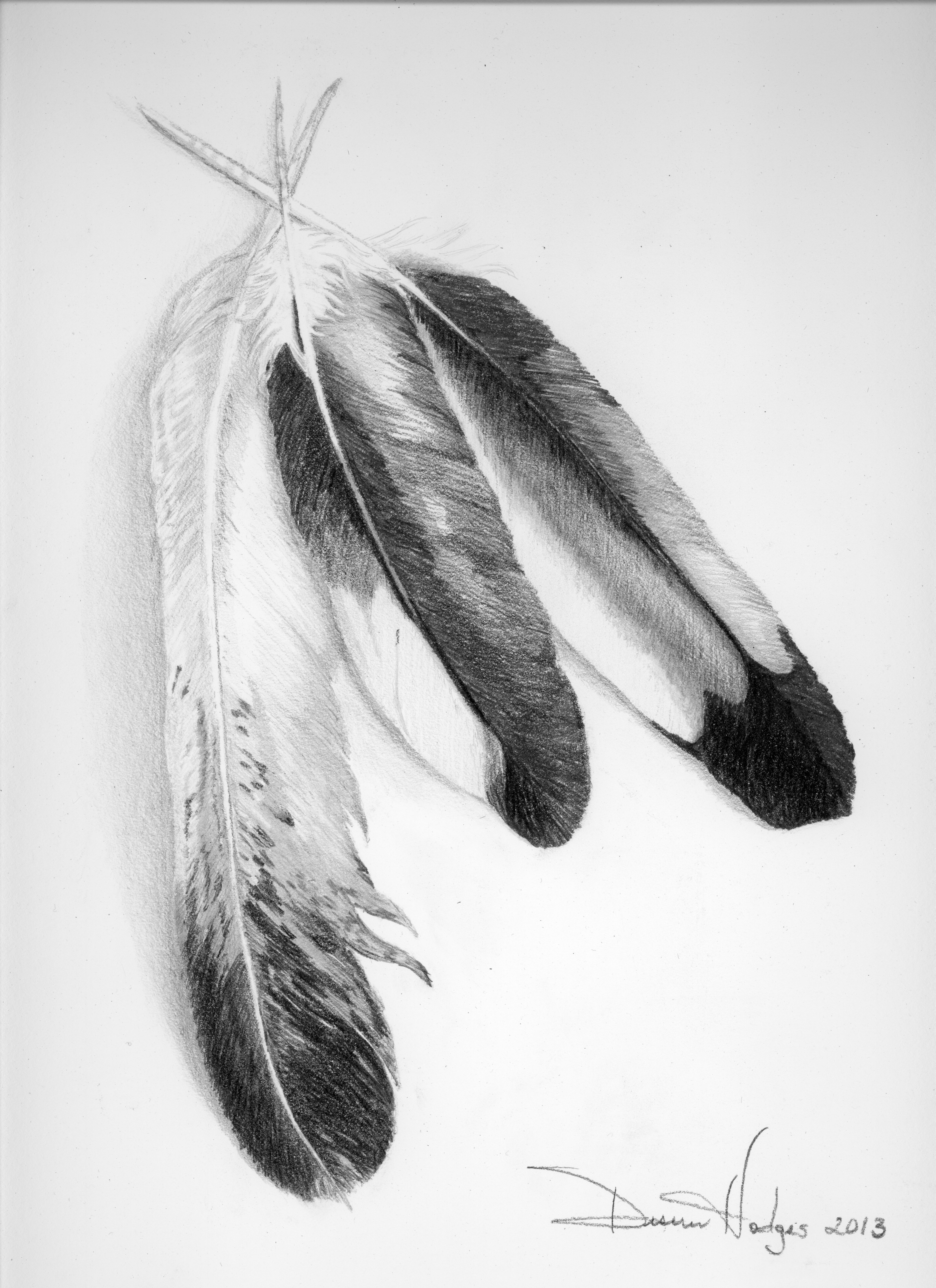 posted in art work tags eagle feathers feather feathers hawkEagle Feather Pencil Drawing